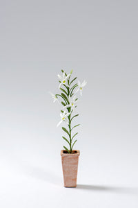 Angraecum Orchid kit for 1/12th scale Dollhouses, Conservatories and Florists