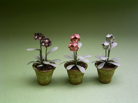 3 Auricula Paper Flower kits for 1/12th Dollhouses, Florists and Miniature Gardens