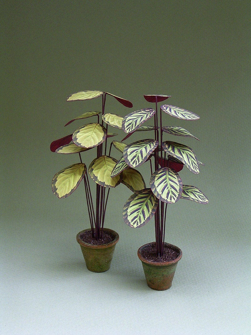Calathea Paper Indoor Plant Kit  for 1/12th scale Dollhouses, Florists and Miniature Gardens