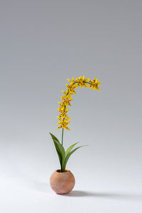 Odontocidium Orchid kit for 1/12th scale Dollhouses, Conservatories and Florists