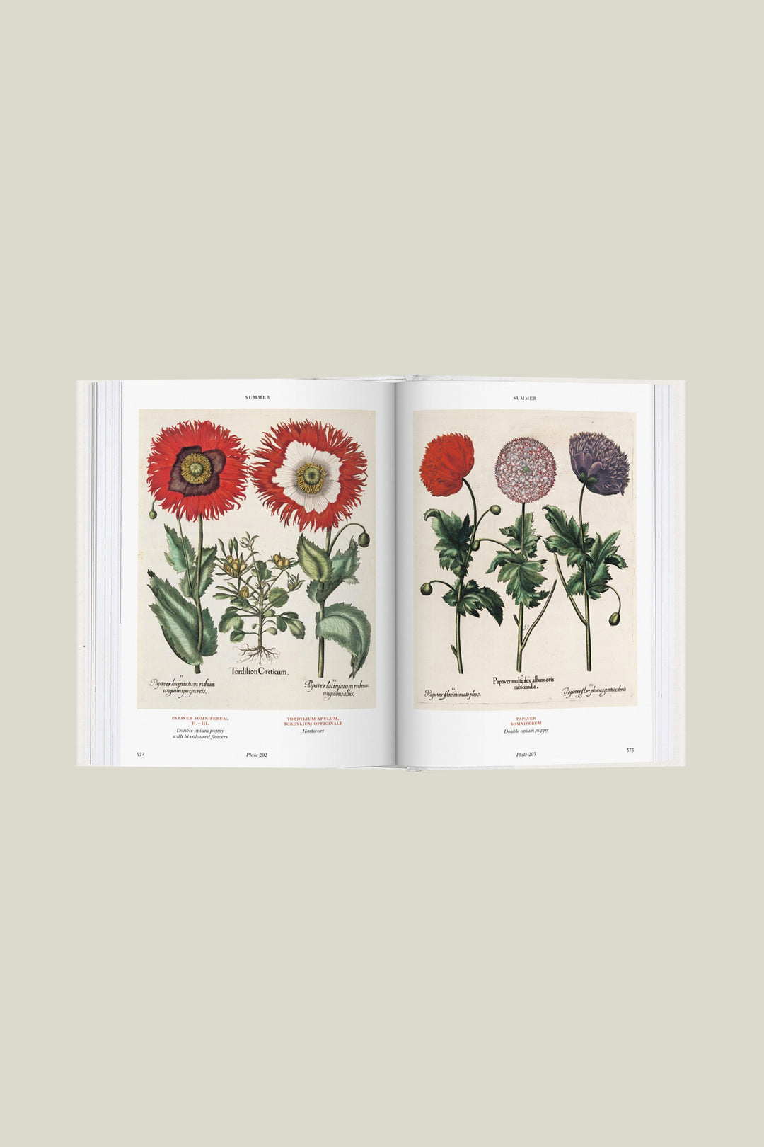 Florilegium - The Book of Plants