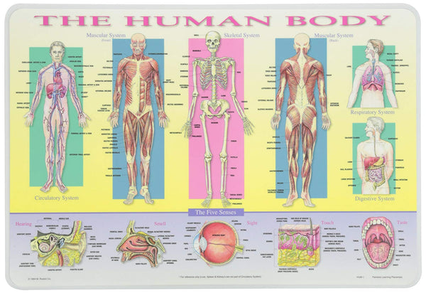 Learning Human Body Placemat