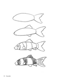 How to Draw Aquarium Animals
