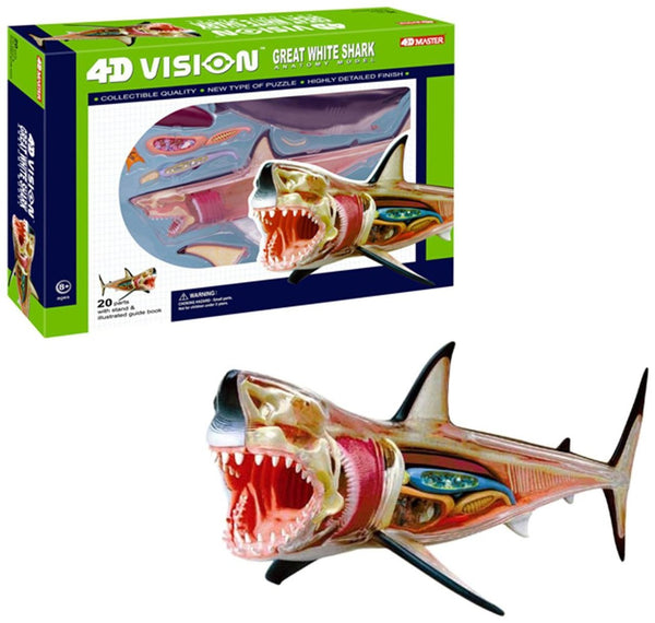 4D Vision: Great White Shark Anatomy Model