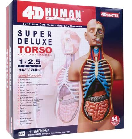 4D Super Deluxe Torso Anatomy Model