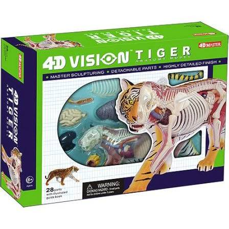 4D Tiger Anatomy Model