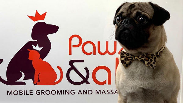 Pawzandall mobile dog groomer