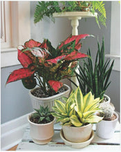 Load image into Gallery viewer, Houseplants: The Complete Guide to Choosing, Growing, and Caring for Indoor Plants