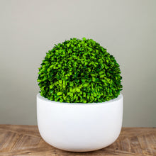 Load image into Gallery viewer, Sunny Planter- Matte White