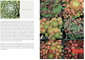 Sempervivum: A Gardener's Perspective of the Not-So-Humble Hens-and-Chicks