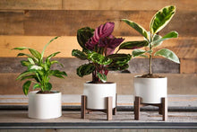 Load image into Gallery viewer, Mid-Century Inspired Table-Top Planter