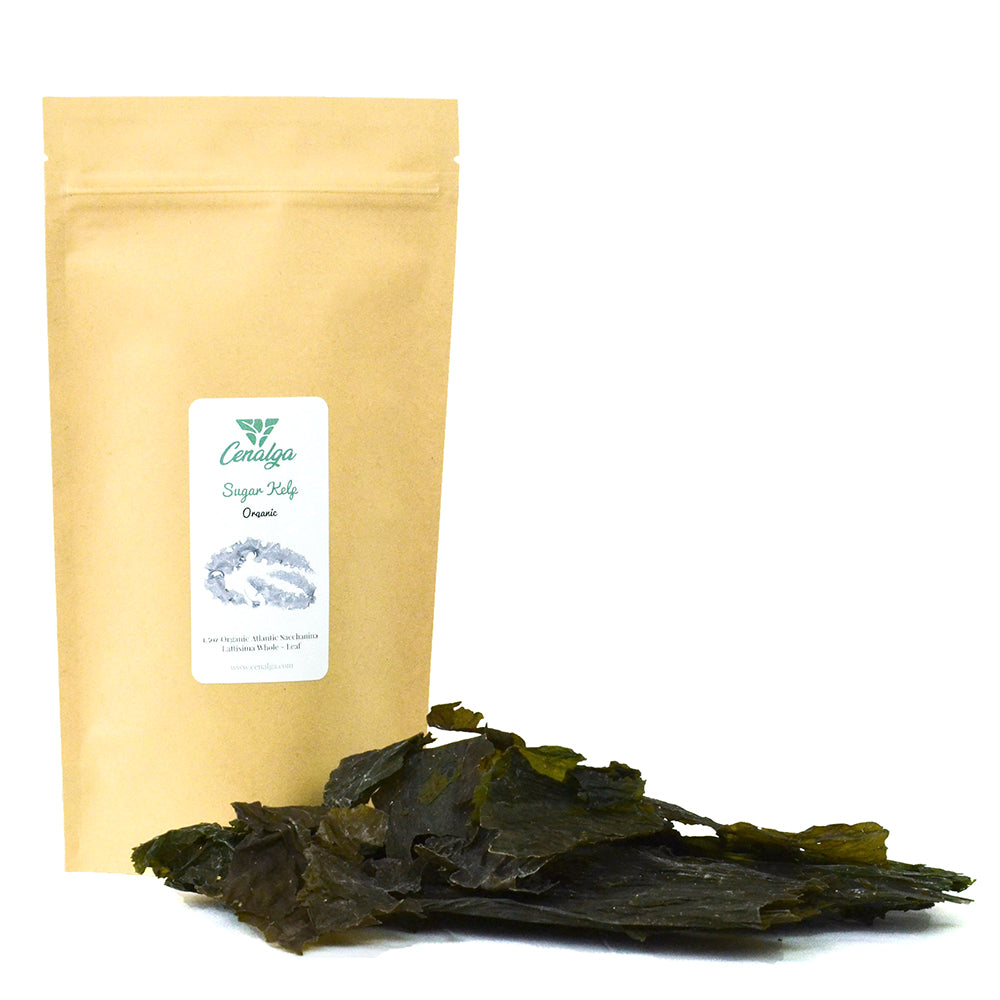 Organic Irish Sugar Kelp (Saccharina latissima) Whole Leaf