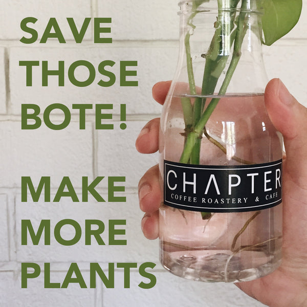 Save Plastic Coffee Bottles for Plant Propagation - by Chapter Coffee Roastery and Cafe
