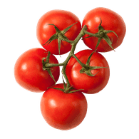 Organic Tomato On The Vine Red (1 bunch of 4-6 tomatoes)