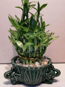 3 small stalks tower lucky bamboo with ceramic three elephant planter - G & J Florist