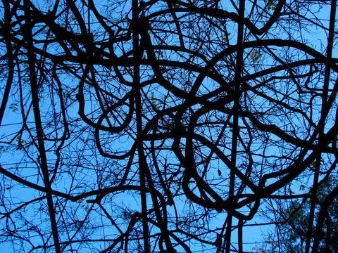 Patterned branches and blue