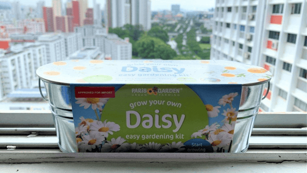 Grow Your Own Daisies at Home with Paris Garden