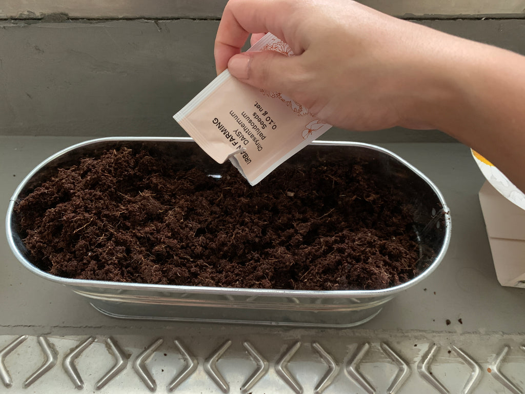 Sprinkling the seeds evenly into the soil mixture