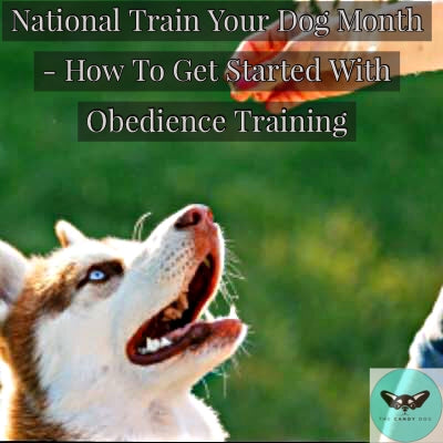 How To Get Started With Dog Obedience Training
