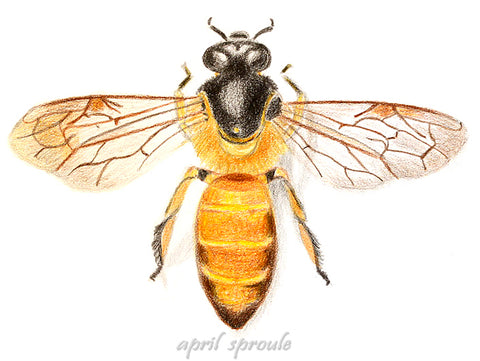 Bee Story, April Sproule