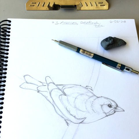 Bird drawing by April Sproule