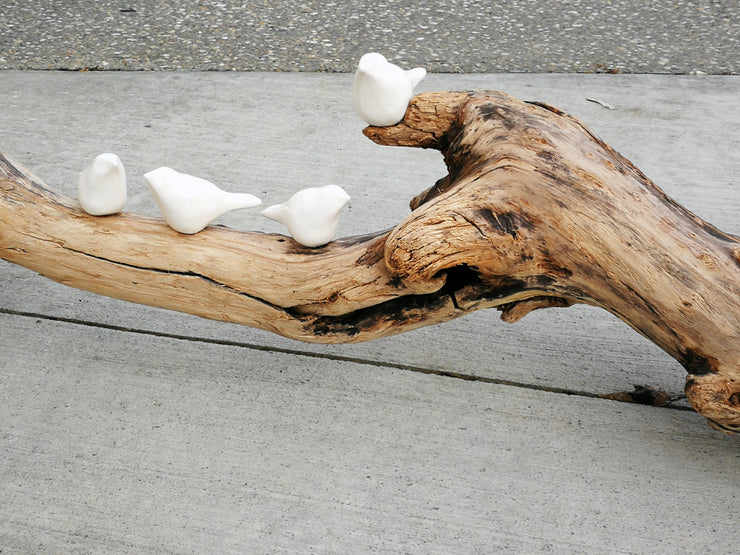 White Birds on Driftwood 7A