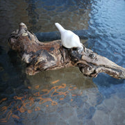 White Bird on Driftwood 1C