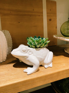 DIY Indoor Kit: Succulent Frog