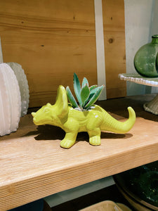 DIY Indoor Kit: Succulent Dino