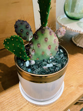 Load image into Gallery viewer, DIY Indoor Kit: Cactus