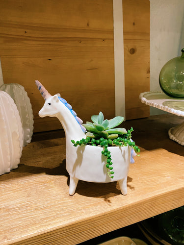 DIY Indoor Kit: Succulent Unicorn