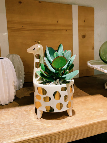 DIY Indoor Kit: Succulent Giraffe