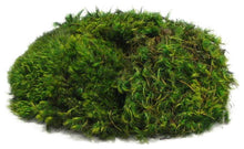 Load image into Gallery viewer, Mood Moss Preserved