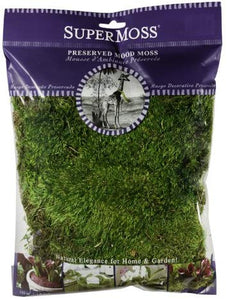 Mood Moss Preserved