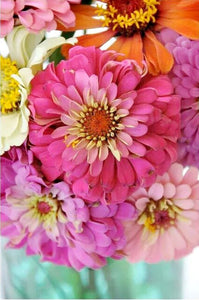 Zealous Zinnias Paint By Numbers