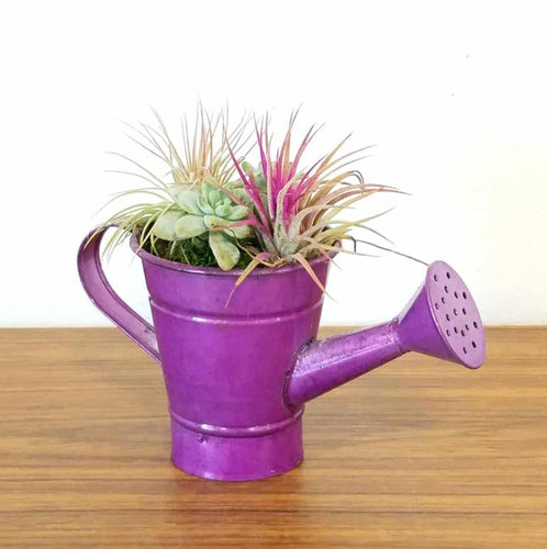 Watering Can Airplant