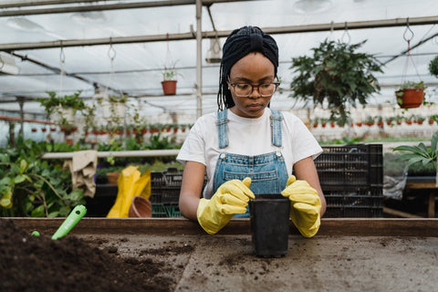 A student is gardening in a greenhouse