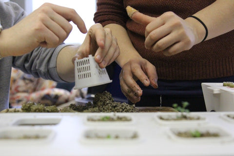 Two home gardeners working on their hydroponic plants