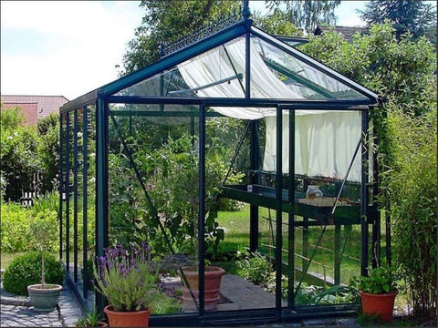 Plants in a greenhouse with shade cloth