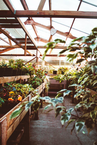greenhouse, mulberry greenhouses, garden structure