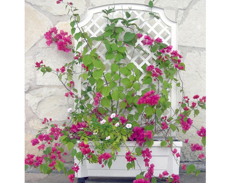 Image of Calypso Planter with Trellis and Reservoir - Mulberry Greenhouses