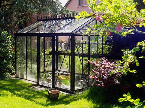 Exaco Janssens Royal Victorian VI 23 Greenhouse 8ft x 10ft - BLACK - Mulberry Greenhouses - {product_vendor] - Hobby Greenhouse