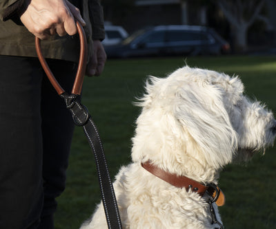 Meet the NEW! Wag Dog Leash