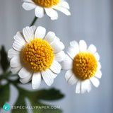 Feverfew 3D Paper Flower Template and Tutorial for Cricut & Silhouette Cutting Machines (SVG, DXF)
