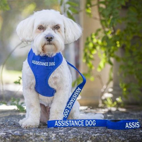 The Truth about Assistance Dogs in Australia