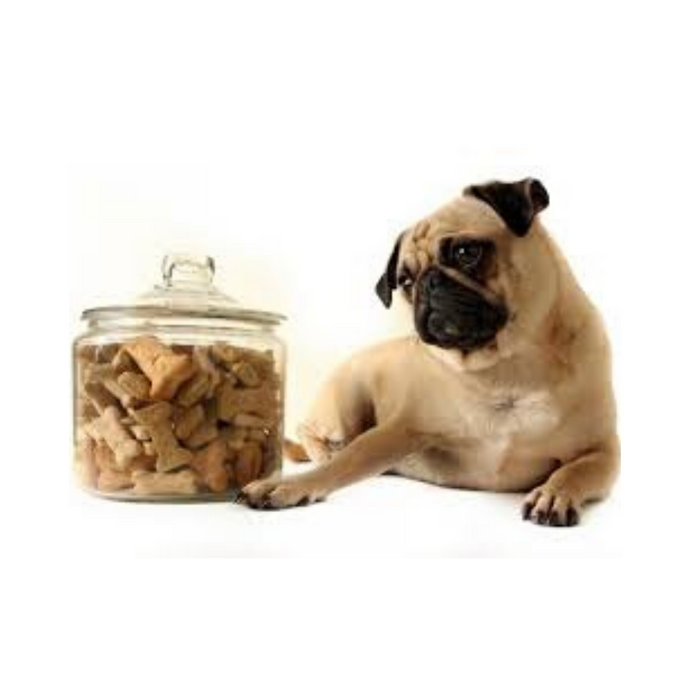 When should you use dog treats?
