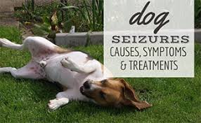Holistic Treatments for Epilepsy in Dogs