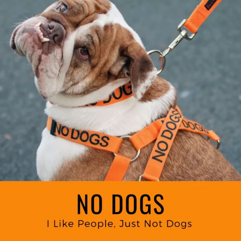 NO DOGS - 'I like people, just not dogs'