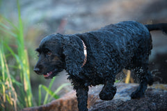 Copper Identification Collars For Pets