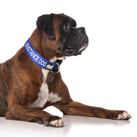 Assistance Dog Collar